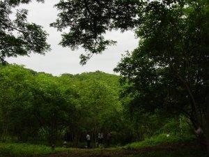D394_The Cerro_071102